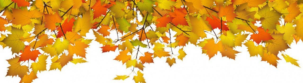 Herbstbltter, Bltter, Hintergrund, Banner, Panorama, Webdesign